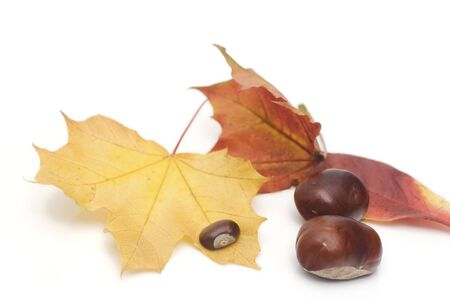 conker: arrangement made of leaves and chestnuts on white
