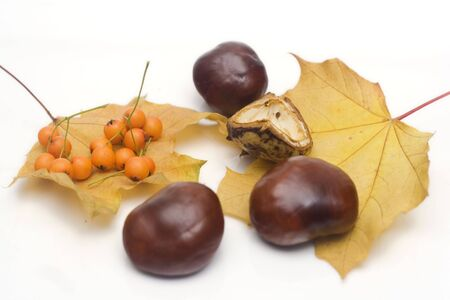 conker: arrangement made of leaves, chestnuts and rowanberries