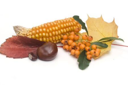 conker: arrangement made of leaves, chestnuts and sweetcorn