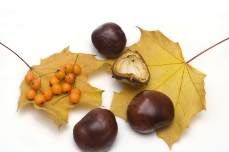arrangement made of leaves, chestnuts and rowanberries photo