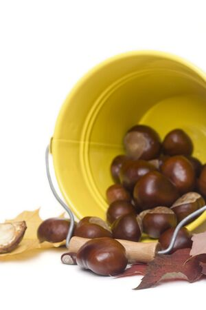 conker: chestnuts spilling out from a yellow bucket Stock Photo