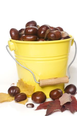 yellow bucket full of chestnuts isolated on white photo