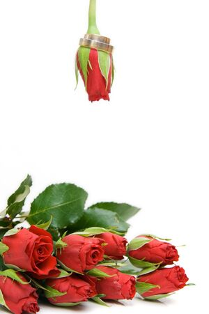 red rose isolated on white with space for text Stock Photo - 4016149