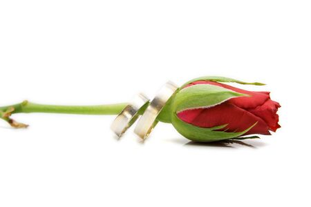 red rose isolated on white with space for text Stock Photo - 4016163