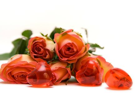 Roses isolated on white. space for text photo