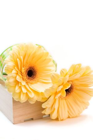 yellow gerberas isolated on white. valentines day Stock Photo - 4169085