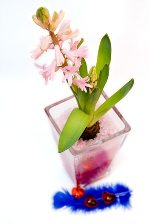 flower in the glass pot with pink sand isolated on white photo