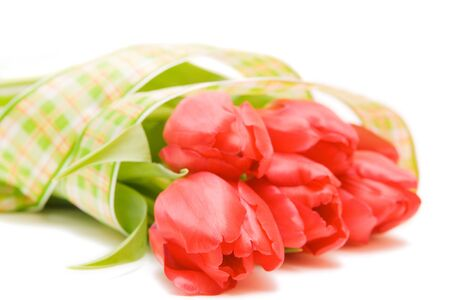 red tulips isolated on white. valentines day. photo