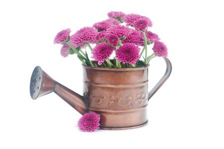 watering can with flowers isolated on white Stock Photo