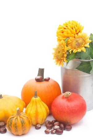 the chestnuts and pumpkins isolated on white photo
