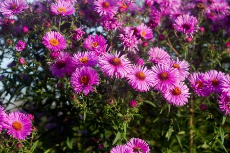 a lots of beautiful pink little flowers Stock Photo - 12171437