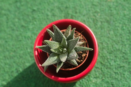 spikey: a little green cactus in a red pot Stock Photo