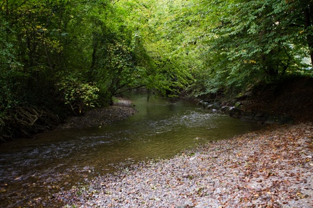 trees with green leaves over a river Stock Photo - 12171430