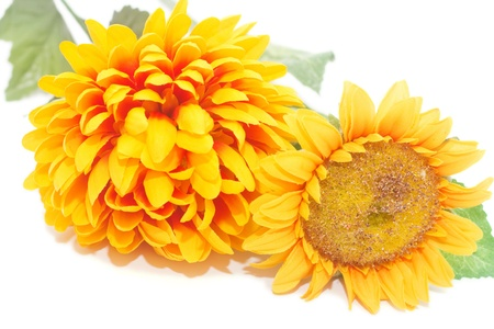 yellow autumn flowers isolated on a white background Stock Photo - 12171435