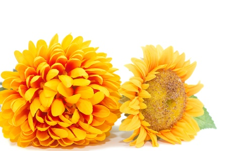 yellow autumn flowers isolated on a white background Stock Photo - 12715141