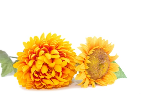 yellow autumn flowers isolated on a white background Stock Photo - 12715142