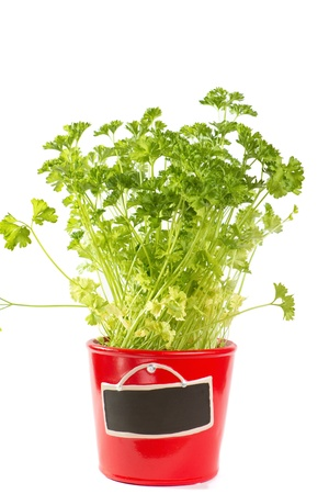 Parsley in a pot isolated on white  Stock Photo - 15917054