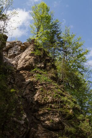the crags: The trees growing on the high rocks Stock Photo