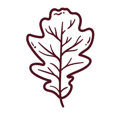 Oak leaf doodle line vector icon. Vector illustration