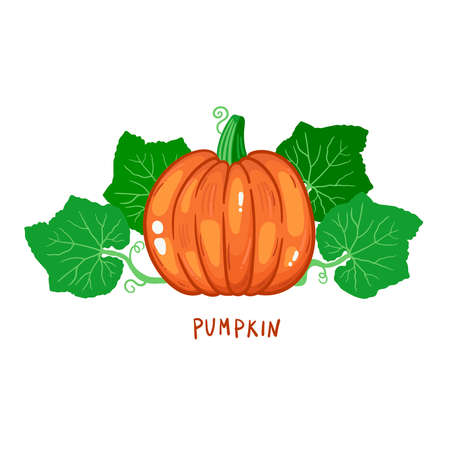 Pumpkin and leafs colorful vegetable vector icon 일러스트