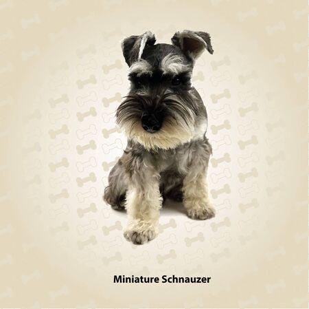 schnauzer: Miniature Schnauzer vector