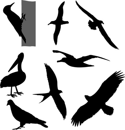birds silhouettes collection