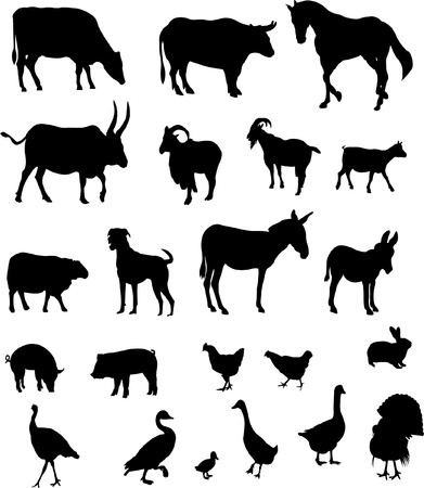 domestic goat: big collection of farm animals