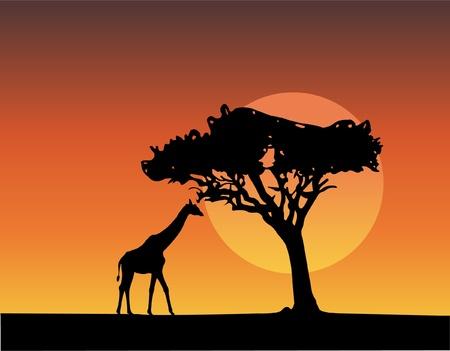 Afrika safari silhouetten van giraf  Vector Illustratie