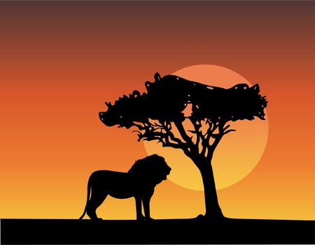 wild nature wood: africa safari silhouettes of lion
