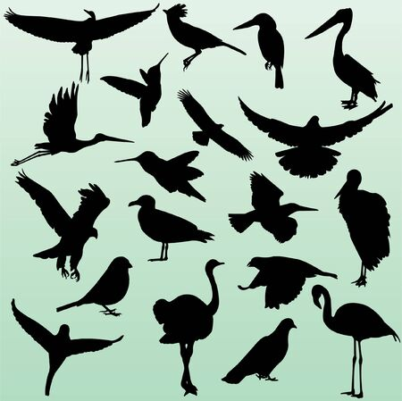 silhouette of birds 2
