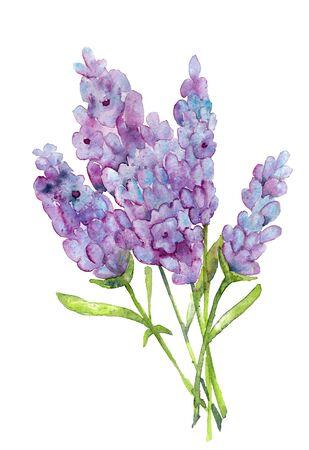 Hand drawn watercolor lavender flower Banque d'images - 133242732
