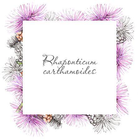 Watercolor flowering rhaponticum carthamoides frame on light backdrop. Stock fotó