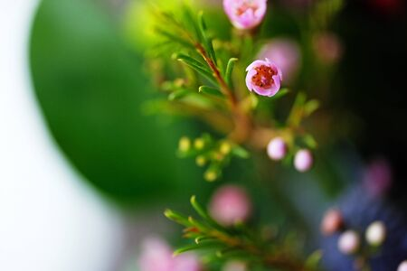 Pink little grass flower with green leaf blurry background. Macro pic.