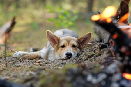 A pet dog rests by a burning fire in the forest.