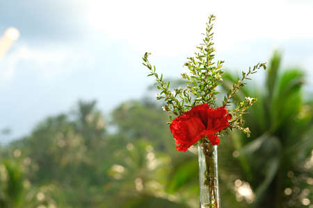 A bouquet with a red flower stands in a glass vase against a background of blurred palm trees Banque d'images
