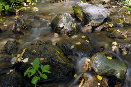 Mountain stream in the Altai Republic. Water runs over rocks, close up