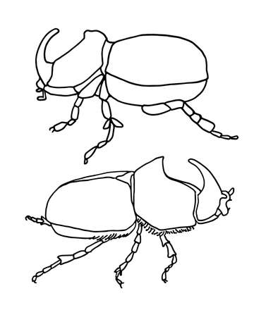 Set of outline of a rhinoceros beetle, side view. Isolated on a white background vector graphics. Simple vector illustration for logo, coloring and other design. Illustration