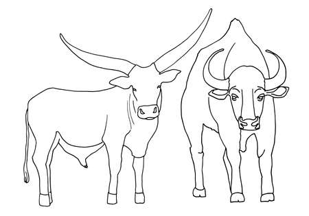 Set sketch of a standing bull with large horns, isolated on a white background. Contour vector illustration for coloring and other design Illustration