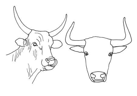 Set of bull head icon thin line, farm animal concept, cattle sign on white background, bull head silhouette icon in outline style for coloring, mobile concept and web design.