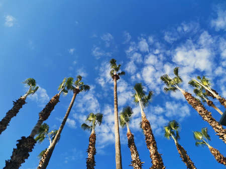 Palm trees against a blue sky with clouds, bottom view