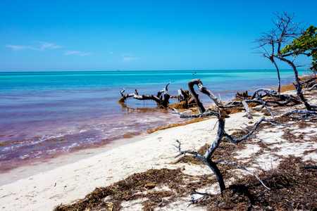 suelo arenoso: Landscape of ocean beach. Tropical island. Old dry dead tree on the coast in the sunny day Foto de archivo