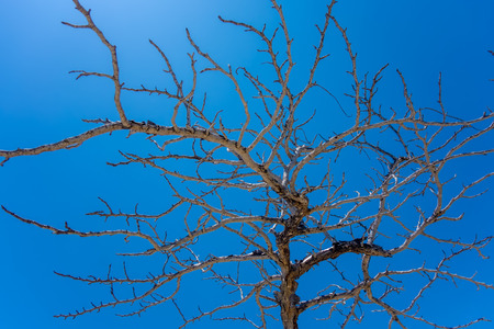 characteristic: Old dry tree on the sky background Stock Photo
