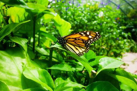 Butterfly sitting on leaves in a botanical garden. Environmental protection concept
