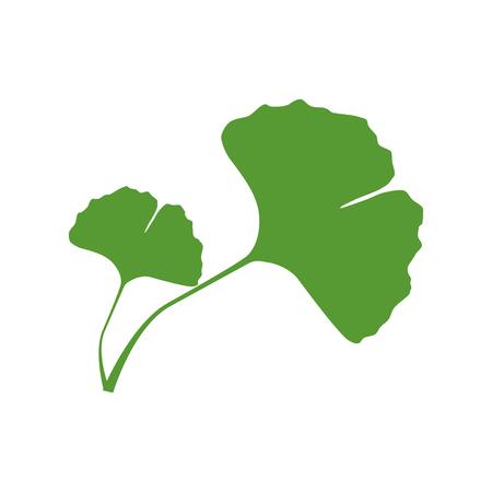 흰색 배경에 은행 나무 biloba 두 잎의 격리 된 한 색 녹색 실루엣