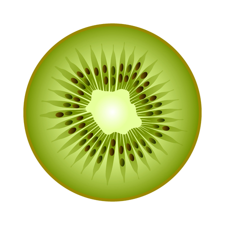 Isolated realistic colored circle round slice of green color juicy kiwi on white background