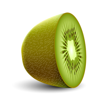 Isolated realistic colored half of green color juicy kiwi with shadow on white background