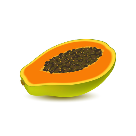 Isolated realistic colored half slice of juicy orange papaya, pawpaw, paw paw with seeds with shadow on white background. Side view Illustration