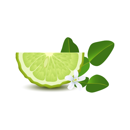 Isolated half of circle juicy green color bergamot with leaf, white flower and shadow on white background. Realistic colored slice.