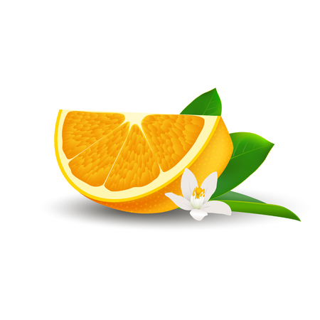 Isolated realistic colored slice of juicy orange with green leaf, white flower and shadow on white background Illustration