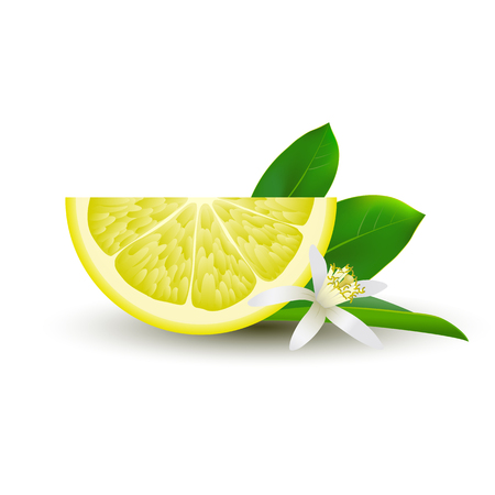 Isolated half of circle juicy yellow lemon with white flower, green leaf and shadow on white background. Realistic colored slice
